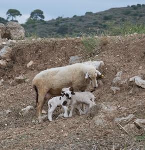 Mum and kids reunited